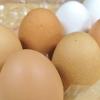 卵のパッケージに公正マーク。表記の信頼性に不安