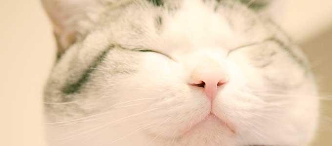 鼻呼吸をする猫