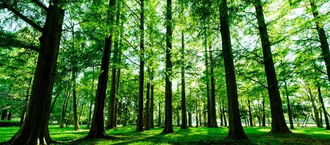 光が差し込む森