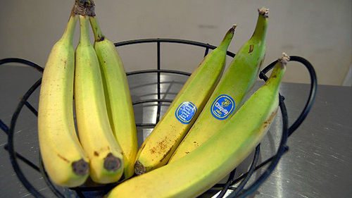バナナの熟され方の違い