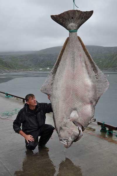 エンガワの代替魚