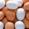 白い卵と茶色い卵は、味も栄養価も同じなのに値段だけが違う