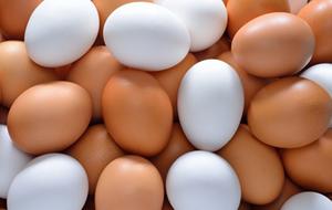 白い卵と茶色の卵