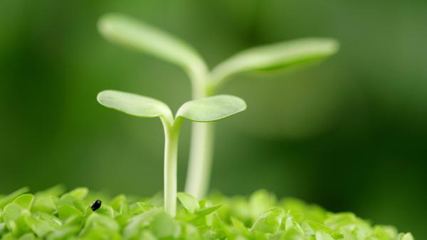 植物に炭酸水