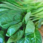 葉もの野菜を「パリッ」とおいしく長期保存する2つのポイント