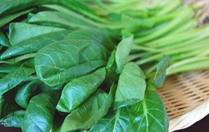 キャベツやレタス、小松菜やほうれん草などの葉物を上手に保存