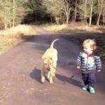 犬が赤ちゃんを散歩につれていく。ワンコの面倒見の良さに驚き