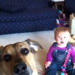 シャボン玉を食べる犬。それ見て爆笑する赤ちゃん