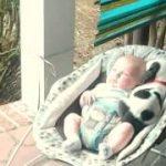 寝ているベビーべッドの隙間に、体を変形させて眠る犬