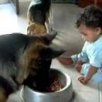 犬のご飯に赤ちゃんがいたずら。辞めてくれワン