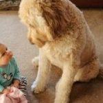 初めて人間の赤ちゃんに会った31匹の犬のオモテナシ