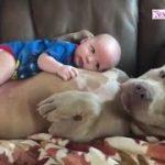 赤ちゃんを守る26匹の犬。みんな我が子と思ってるのかも