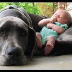 15匹の赤ちゃんと遊ぶ犬。どのワンちゃんにも癒されます